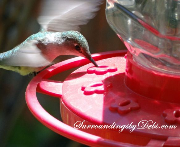 Hummingbird Drinking 3