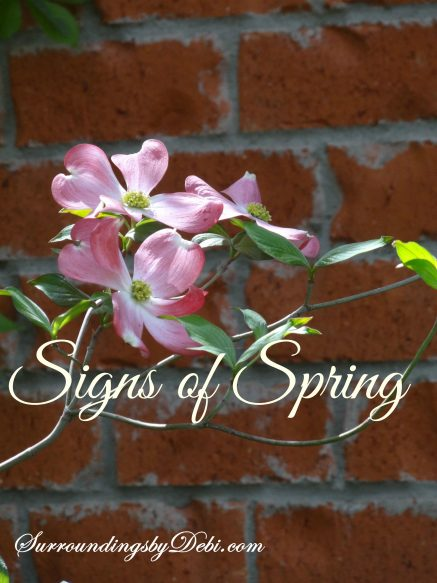 Dogwood Signs