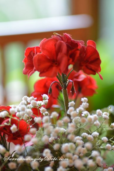 Red-Geranium-Bloom-and-Baby