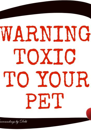 Xylitol Warning Toxic to Your Pet