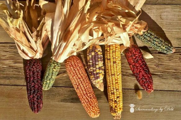 Indian Corn with Husks